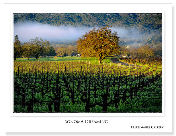 FritzImages | Update:Nikon 16 35mm f4 VR | image name = 20100222 0440 CA Sonoma cc copy white