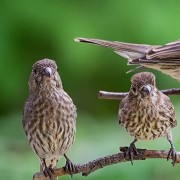 FritzImages | FritzImages 2014 August Blog | image name = FIF 20140730 777 NY Summer Birds IOP2 180x180
