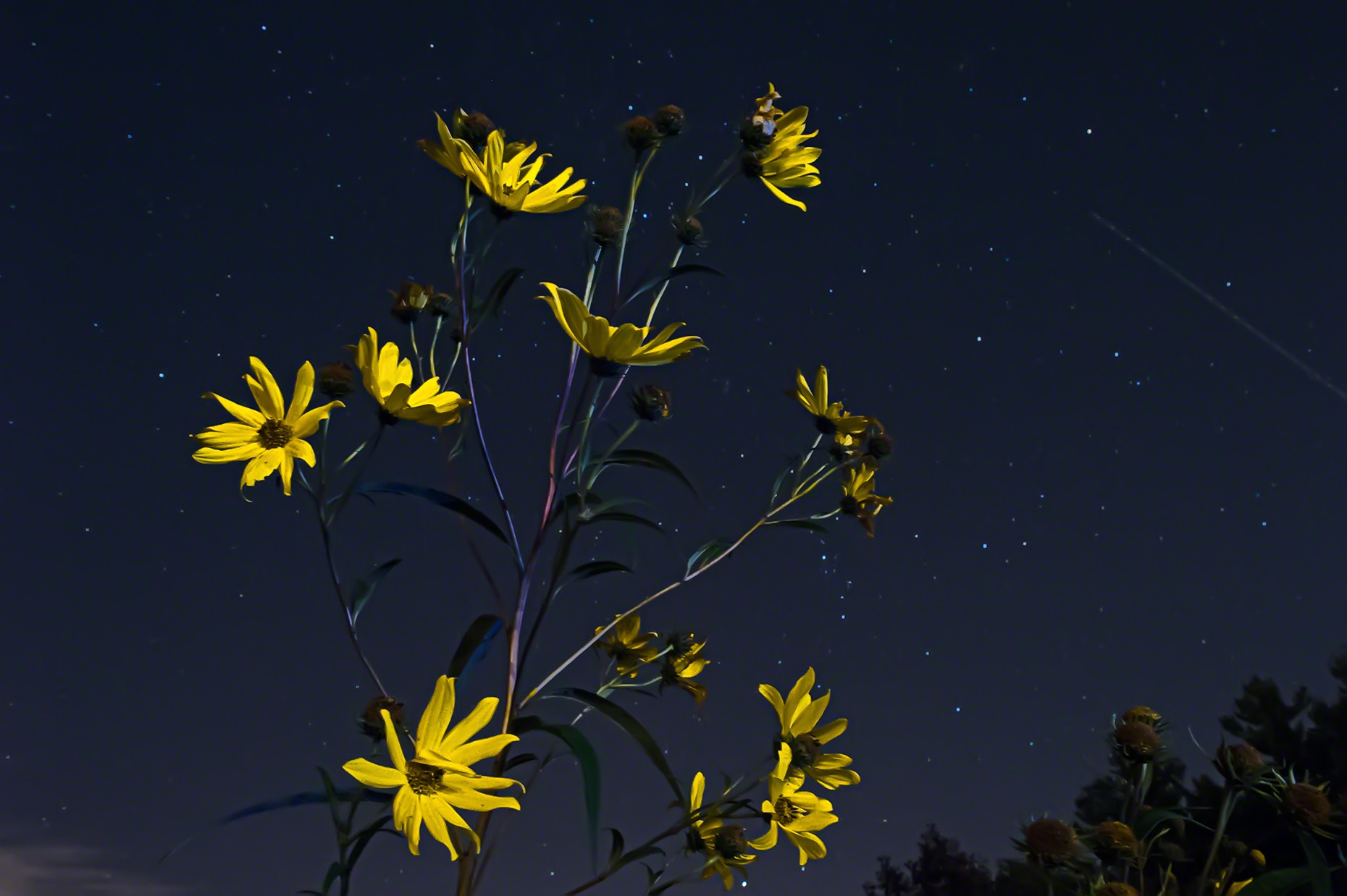 FritzImages | Travel and Outdoor Digital Images | image name = FIFP 20140923 0020 NY Nightpainting Troy Yellow opt