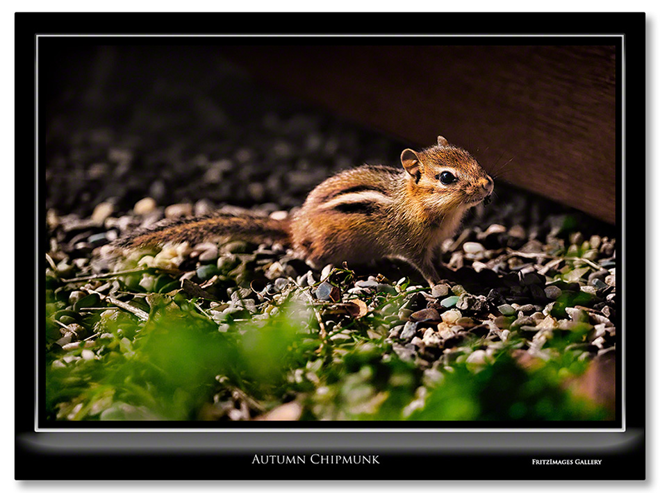 FritzImages | First Look Nikon SB 910 | image name = Autumn chipmunk