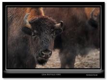 FritzImages | First Look Nikon SB 910 | image name = Gem Buffalo 345 222x166