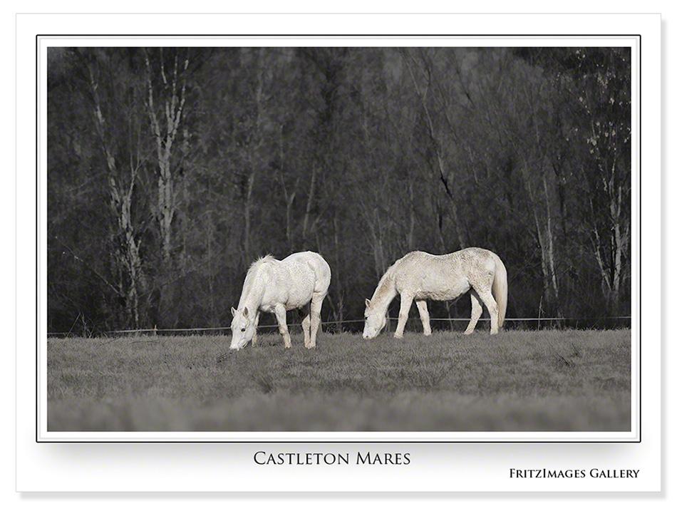 FritzImages | First Look Nikon SB 910 | image name = R3 Castleton Mares