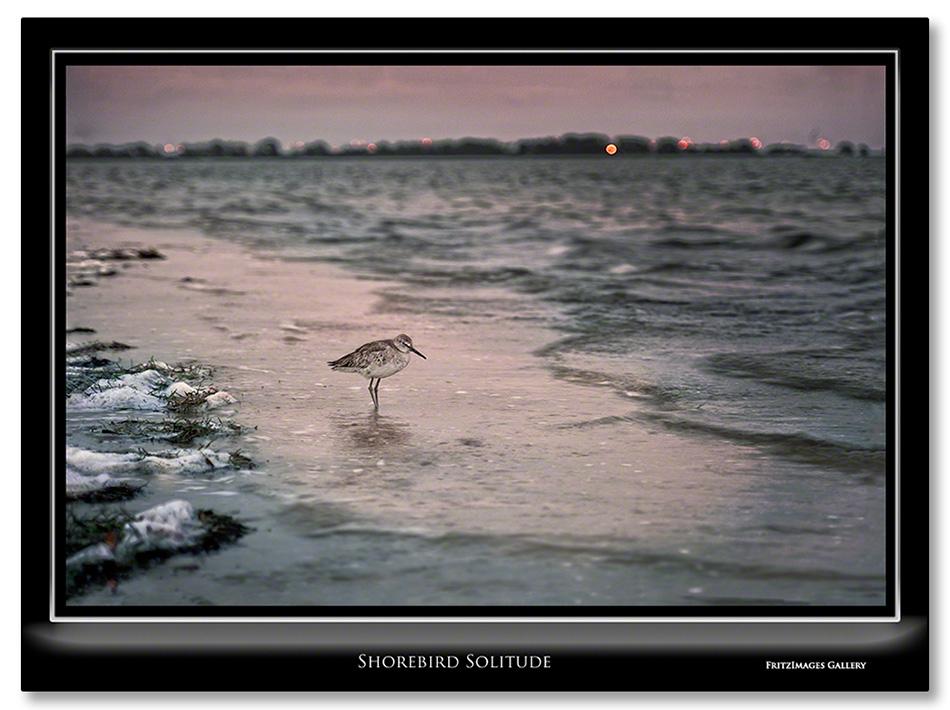 FritzImages   Whoville Sunset Tree   image name = Shorebird Solitude