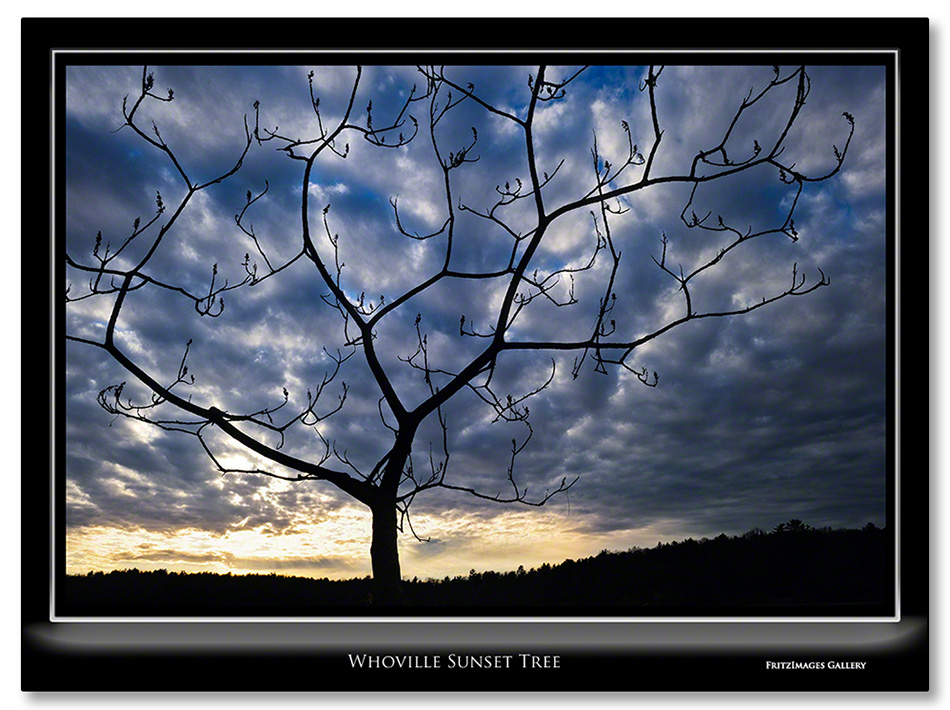 FritzImages   Whoville Sunset Tree   image name = r1 Whoville Sunset Tree