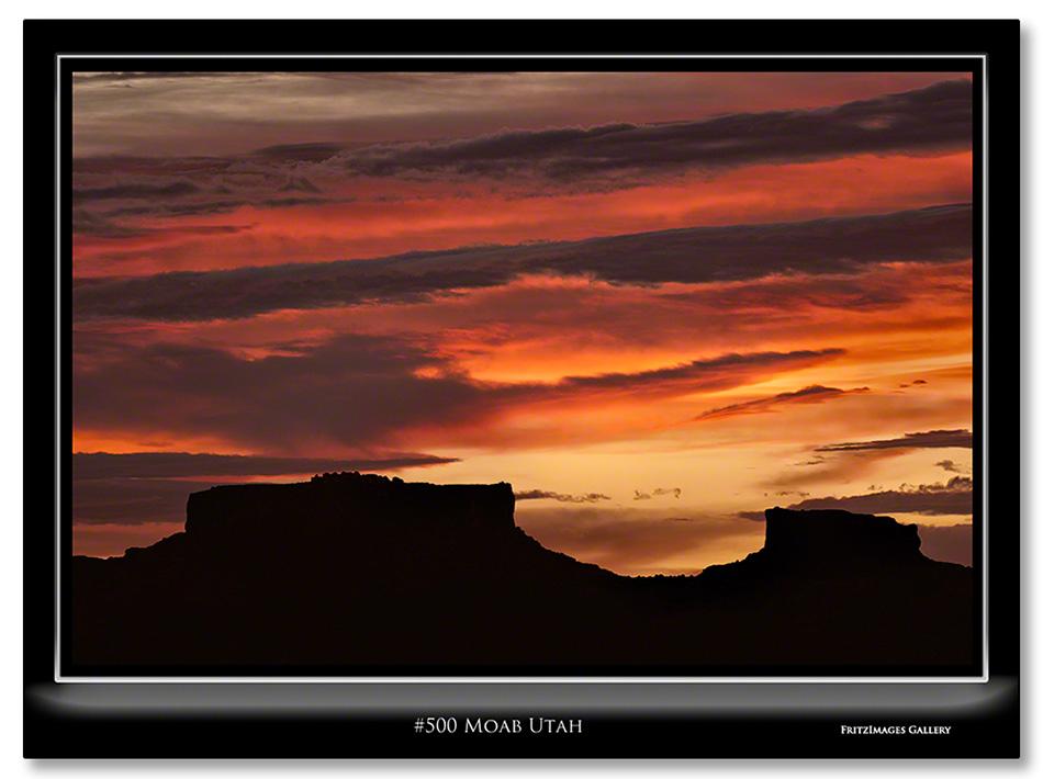 FritzImages | Larus smithsonianus | image name = 500 Moab Utah
