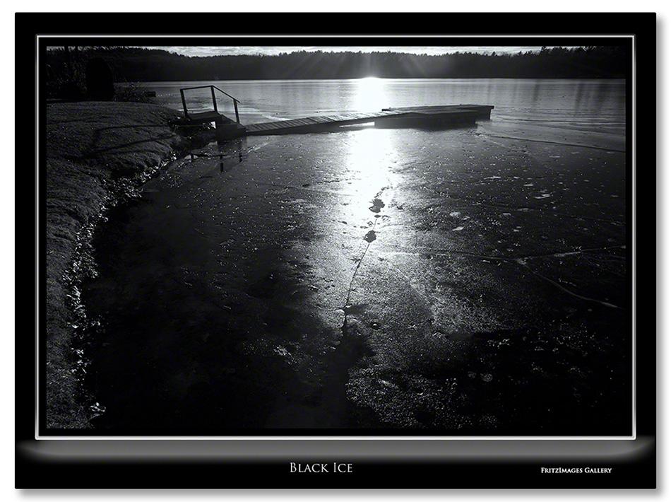 FritzImages | Larus smithsonianus | image name = Black Ice