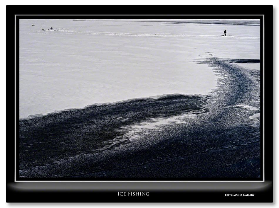 FritzImages   Larus smithsonianus   image name = Ice Fishing