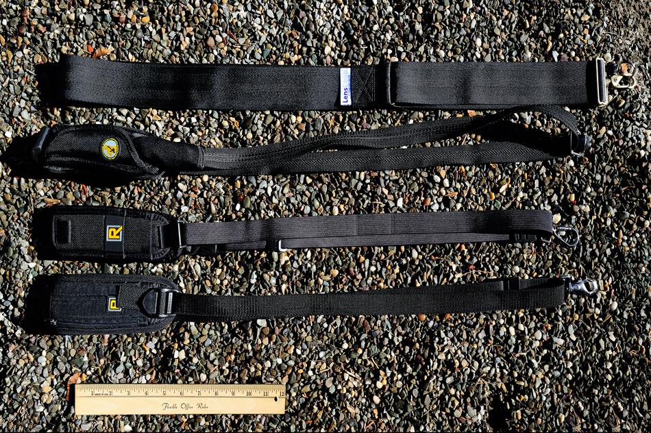 FritzImages   Larus smithsonianus   image name = Lensloop noborder