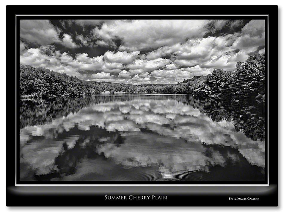 FritzImages | Larus smithsonianus | image name = Summer Cherry Park
