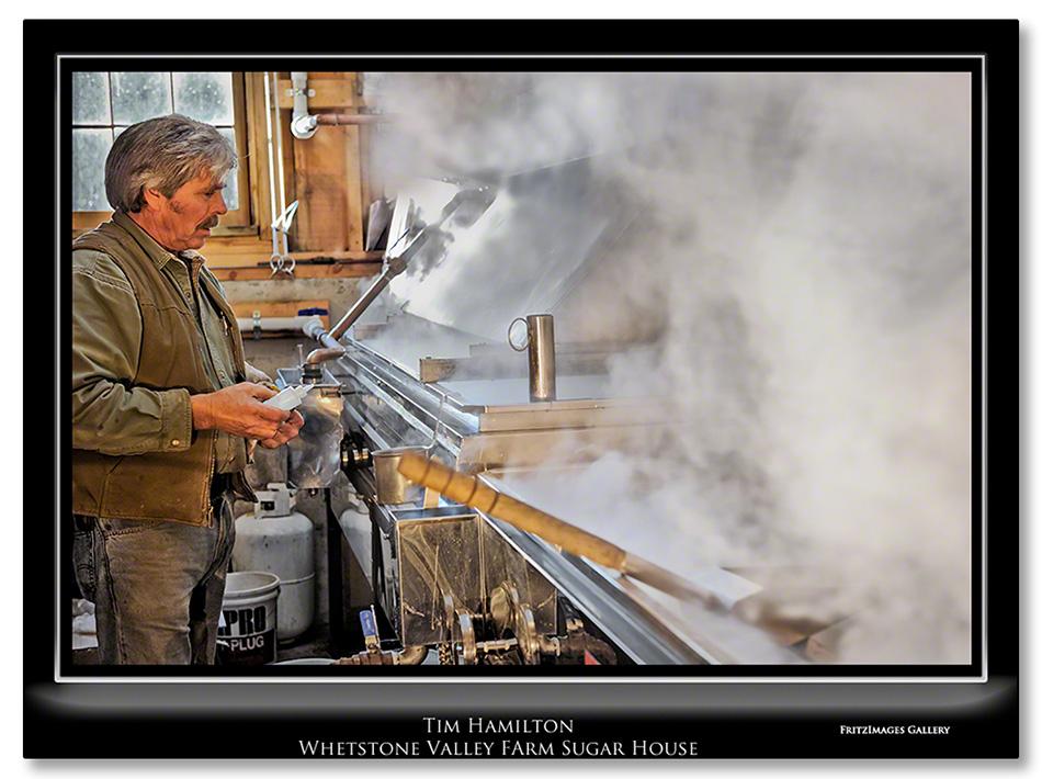 FritzImages | Larus smithsonianus | image name = Tim Hamilton Whetstone Farm Sugar House