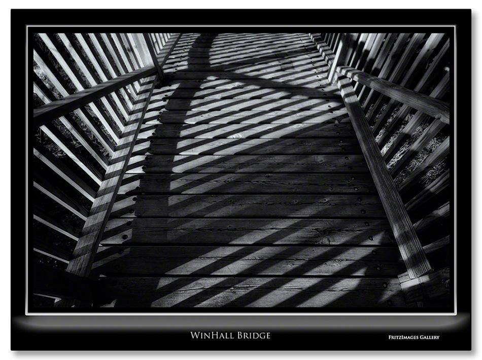 FritzImages | Larus smithsonianus | image name = Winhall Bridge