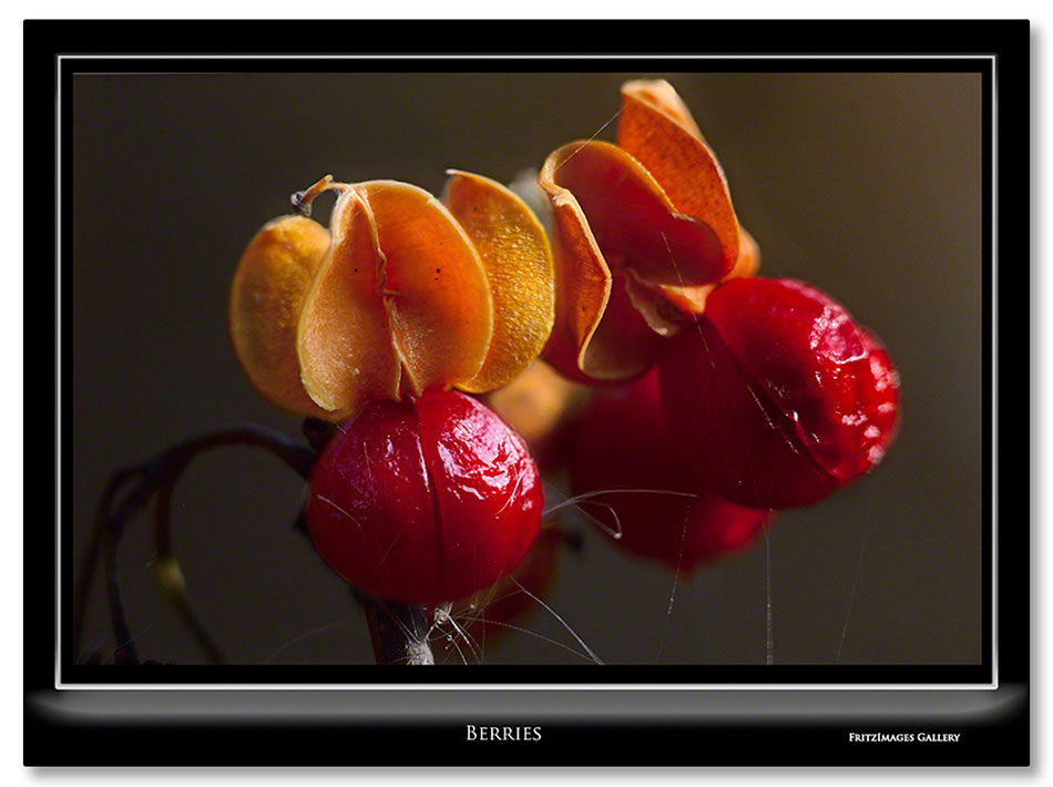 FritzImages | FritzImages October 2012 Gallery | image name = Berries IO