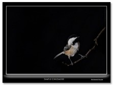 """<a href=""""http://fritzimages.com/blog/2012/simple-chickadee/14198/"""" onclick=""""_gaq.push(["""