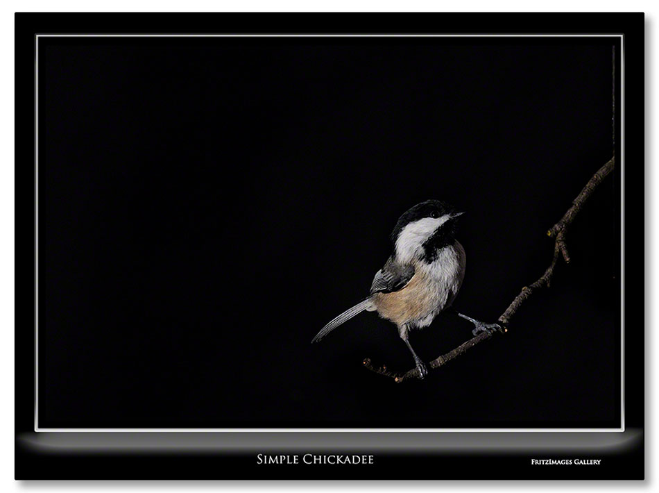 FritzImages | Good Morning Hull from Fort Revere | image name = Simple Chickadee IO1