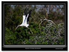 FritzImages | Kinderhook Creek | image name = FI Wood Stork Rookery IO 222x166