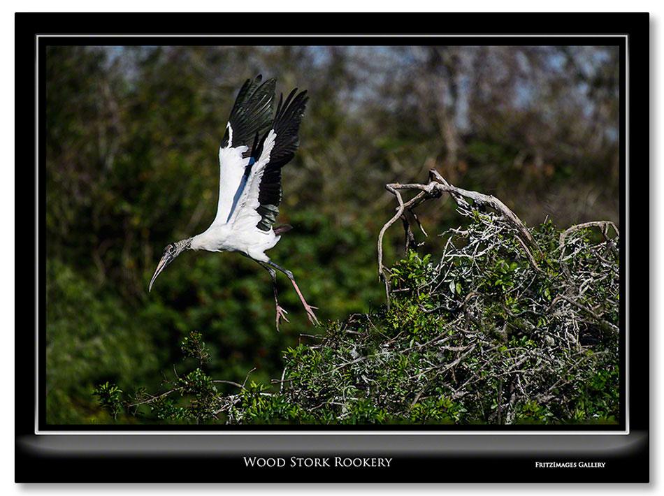 FritzImages | Kinderhook Creek | image name = FI Wood Stork Rookery IO