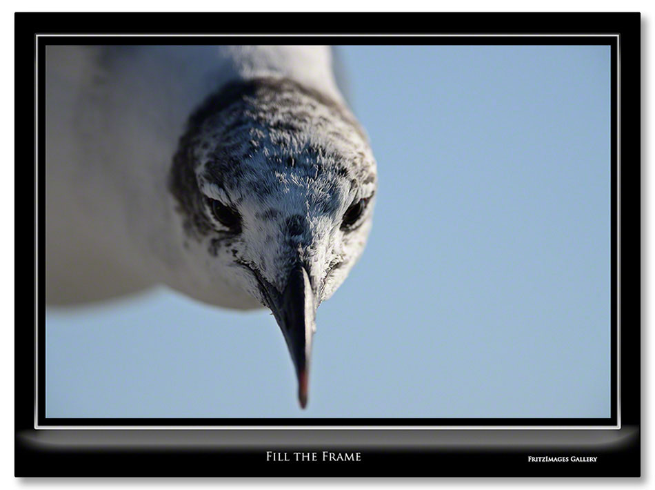 FritzImages | Desoto Spoonbill | image name = Fill The Frame 1 IO