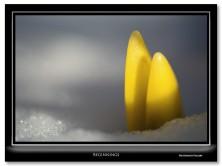 FritzImages | Pocketwizard Plus X | image name = 20130310 Beginings web r2 222x166