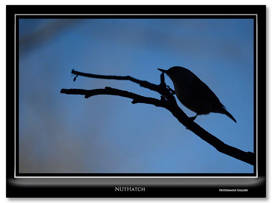 FritzImages | Burden Iron Works | image name = Nuthatch IO