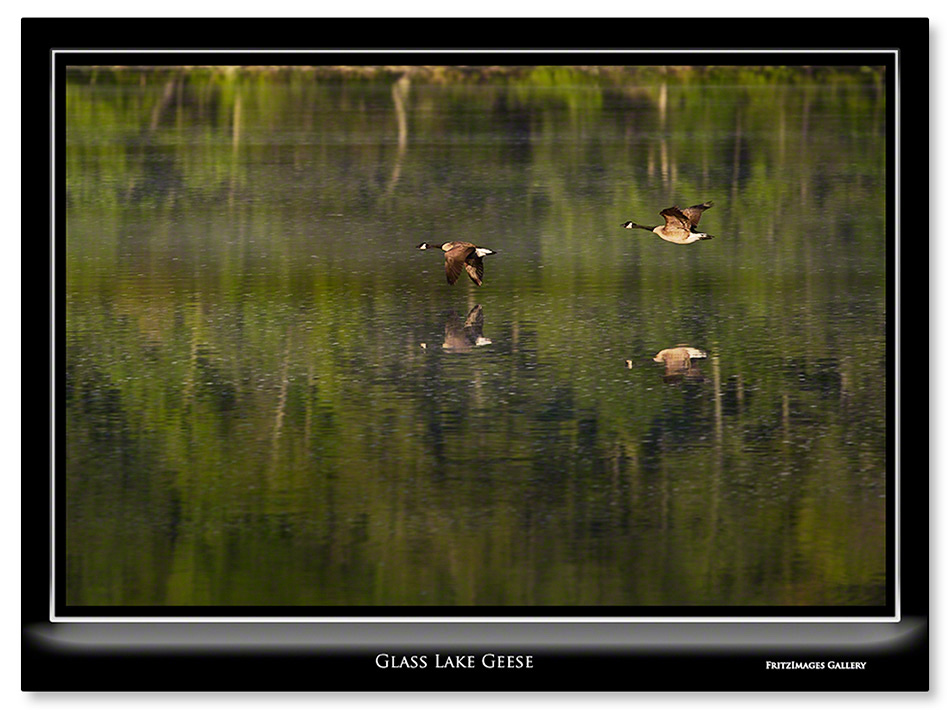FritzImages | Moose Point State Park | image name = 20130527 0023 Glass Lake Geese IO