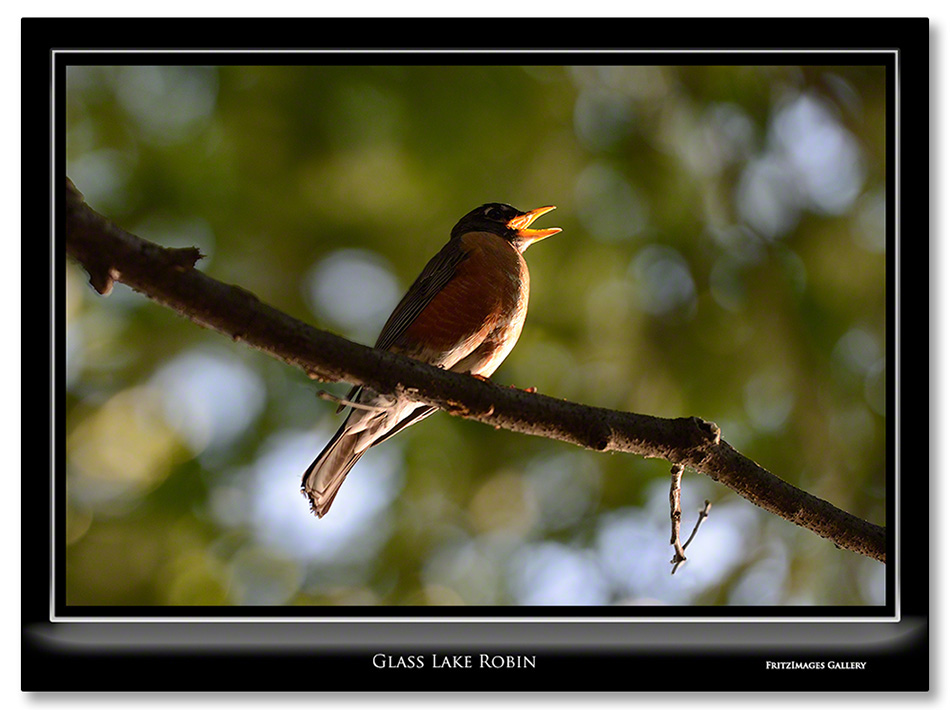 FritzImages | Moose Point State Park | image name = 20130604 0051 Glass Lake Robin IO