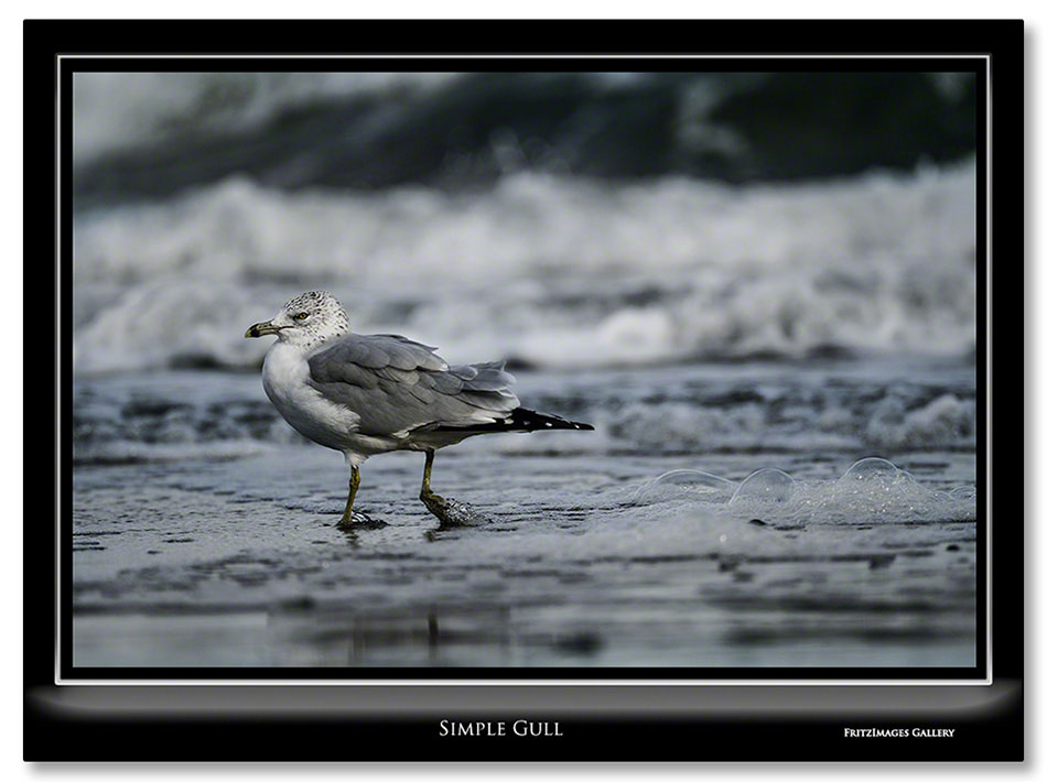 FritzImages | PrePare for Boston WS Parade | image name = FI 20131029 0580 Simple Gull IO