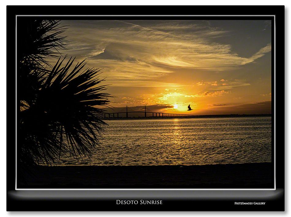 FritzImages | Desoto White Ibis | image name = FI 20131225 0346 FL 02 Desoto Sunrise 1 IO