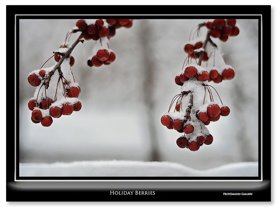 FritzImages | Holiday Berries | image name = Fi Holiday Berries IO