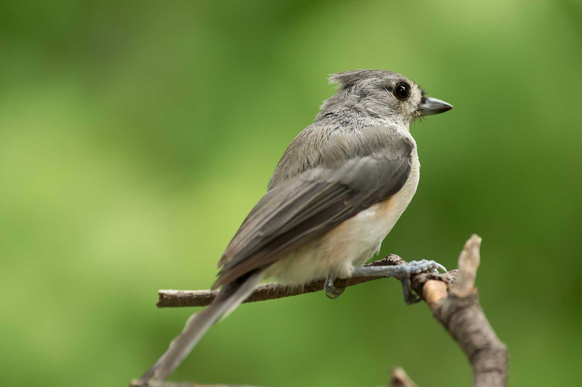 FritzImages | Travel and Outdoor Digital Images | image name = FI 20140731 957 NY Summer Birds
