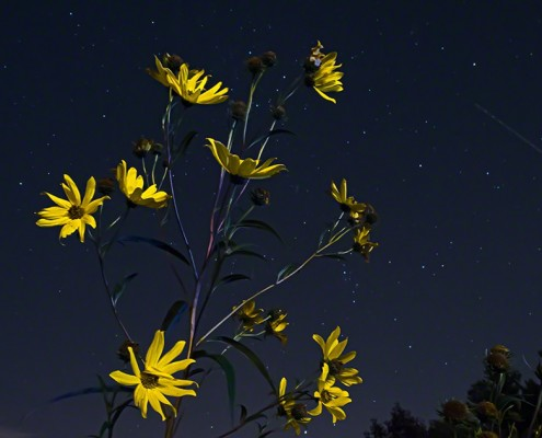 FritzImages | FritzImages 2014 Oct Blog | image name = FI 20140923 0020 NY Nightpainting Troy Yellow opt 495x400